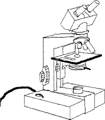 Diagram microscope diagram unlabeled