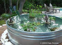 container pond in a stock tank