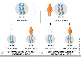 Rhesus Hemolytic Disease