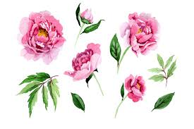 Follow the step by step video tutorial using the svg cut files with your cricut or printable pdf files to hand cut with scissors. Tender Pink Peony Watercolor Set Graphic By Mystocks Creative Fabrica
