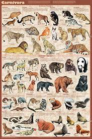 Amazon Com Carnivora Mammals Educational Science Teacher
