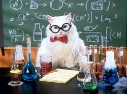 Как правильно писать курсовую Помощь студентам Кот в очках пишет курсовую работу