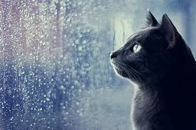 Rezultate imazhesh për haw people feel when its raining