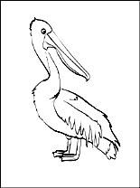 Kleurplaat Pelikanen Gratis Kleurplaten