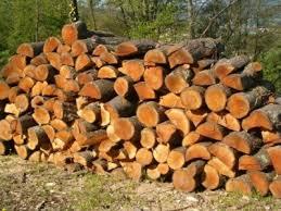 Ragazzino milanese in gita muore sotto una catasta di legna - Milano Post
