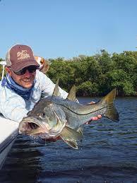 Tips For Catching Gulf Coast Snook Salt Water Sportsman