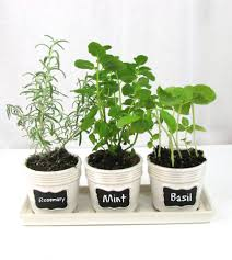 Kitchen Herb Garden Planter Kitchen Windowsill Herb Garden Frugal Upstate