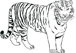 Tiger Shape Templates Crafts Colouring Pages Free Premium Tiger