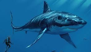 megalodon shark.  Shark Does Megalodon Shark Still Exist In The Deep Ocean To N
