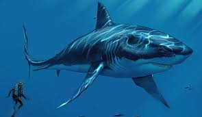 Image result for megalodon