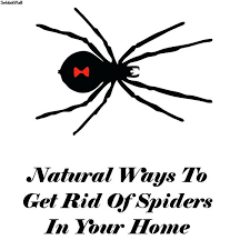 how to kill spiders in house ways get rid of your home inside68
