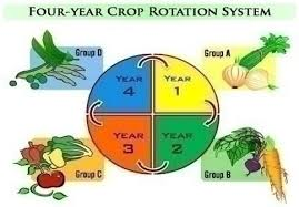 Crop Rotation Chart The Importance Of Crop Rotation