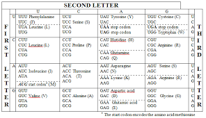 Codon Anticodon Introduction Chart Examples