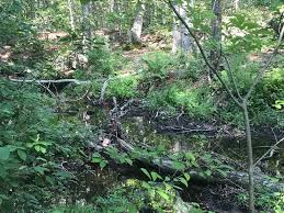 Cockaponset State Forest (Weber Woods) - Connecticut Trail Finder
