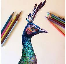 Small Picture 227 best COLOURED PENCIL images on Pinterest Drawings Colored