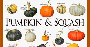 Gourd Identification Chart 39 Explanatory Winter Squash Varieties Chart