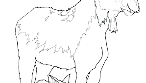 Muffin Coloring Pages If You Give A Moose Muffin Blueberry Muffin