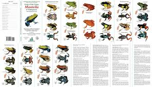 Dart Frog Diary Of A Mad Natural Historian Frog Species