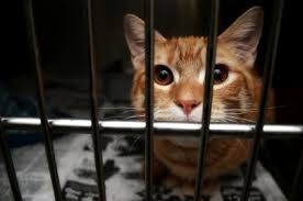 cats in animal shelters. Plain Shelters Cat In Shelter Inside Cats In Animal Shelters