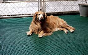 advantages of dog kennel flooring