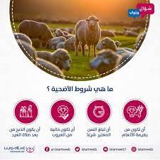 إسلام ويب - ما هي شروط الأضحية ؟ أن تكون من بهيمة الأنعام...