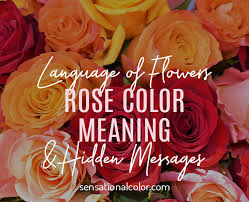 rose color meaning and hidden messages