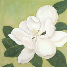 white magnolia oil painting by caitlin coreris view larger photo