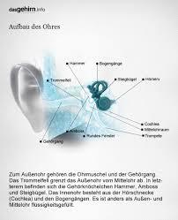 Mediathek Bild Hören Aufbau Des Ohres