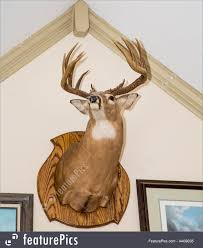 a deer head mounted on a white wall from below