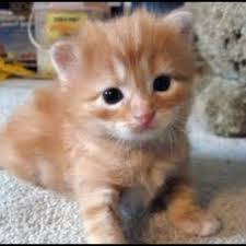 how to feed newborn kittens first 1024x1024 here s how to