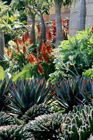 Small Picture Growing and landscaping with Aloe Aloe Aloe Aloe