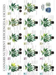 Cannabis Problem Chart Fix The Zinc Deficiency With Your Cannabis Plants Factual