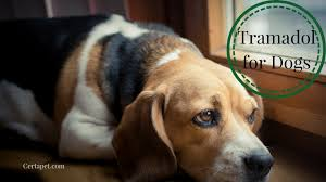 Tramadol For Dogs The A Z Guide Certapet