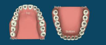 Tooth Meridian Chart Interactive Meridian Tooth Chart Stamford Dentist
