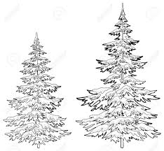 Pine drawing at getdrawings free for personal use pine drawing pine drawing 27 pine drawing