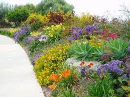 drought tolerant garden. Choosing The Right Plant For Conditions Including Drought Tolerant Gardens Australia Garden E