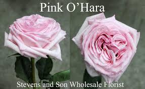 pink o hara photo credit allison linder