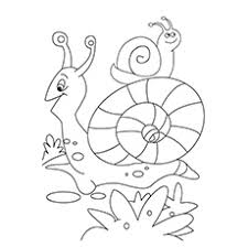 Small Picture 10 Amazing Snail Coloring Pages For Your Toddler