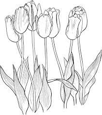 Zeven Tulpen Kleurplaat Gratis Kleurplaten Printen