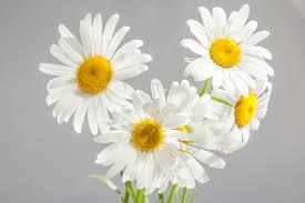 Kết quả hình ảnh cho hoa nở