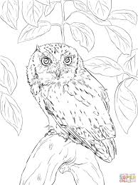 Small Picture Coloring Pages Barn Owl Coloring Page Free Printable Coloring