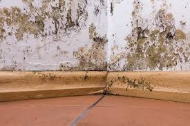brown mold on wall and ceiling what