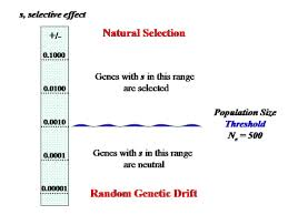 effective population size definition evolutionary genetics stanford encyclopedia of philosophy