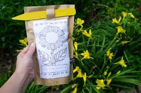 garden in a bag. Kids Garden In A Bag Sunflower