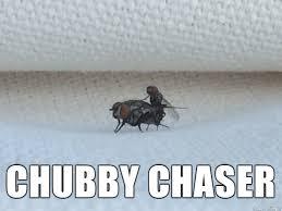 Chubby Chaser - Imgur via Relatably.com