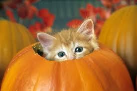 Image result for A cat sitting inside a pumpkin
