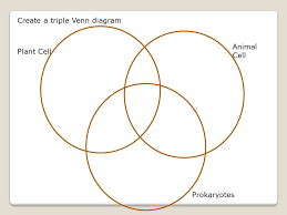 Venn Diagram Plants Triple Venn Diagram Plant Animal Cells Great Installation Of