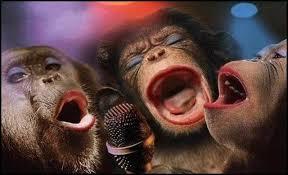 """Résultat de recherche d'images pour """"les singes drôles"""""""