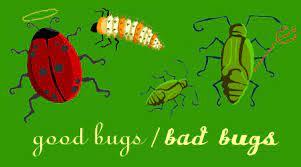 good bugs bad bugs ladybug vs aphid