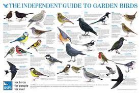 British Garden Birds Chart 73 Beautiful Wall Chart Of British Garden Birds